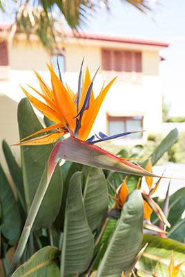 Paradiso Motel Nelson - Flower